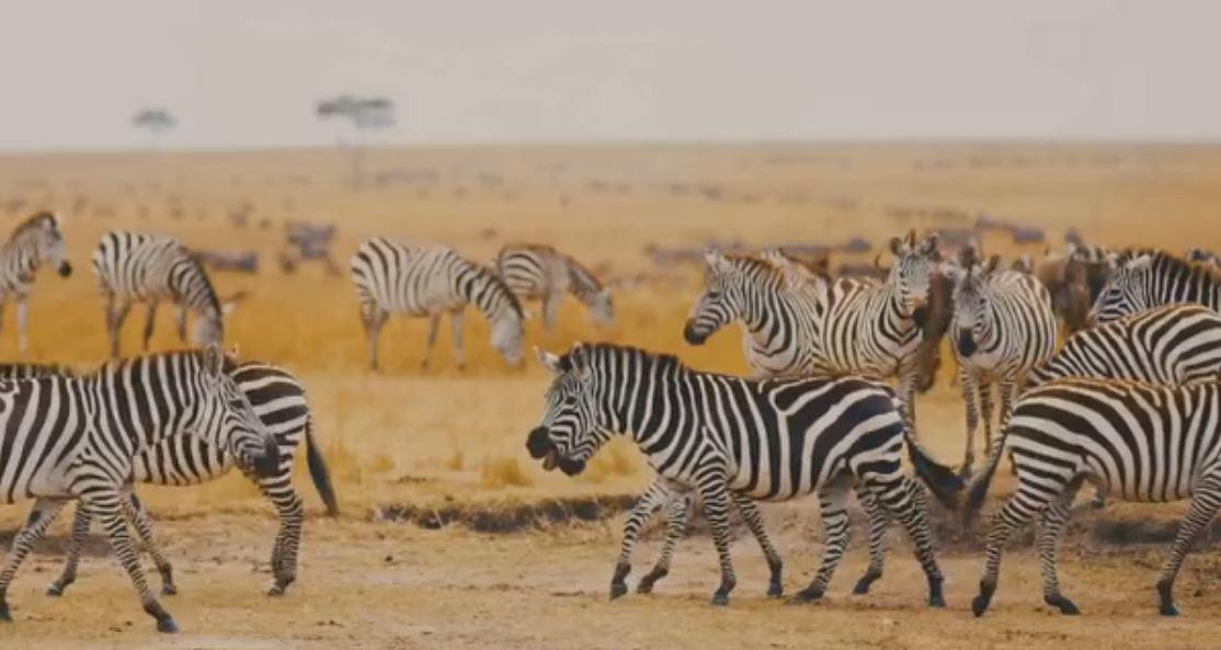马云设非洲巡护员奖励基金呼吁保护生态